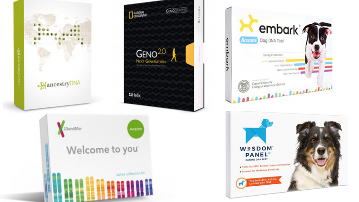 Black Friday 2018: Save on DNA kits like AncestryDNA, 23andMe, and more —plus deals on kits for dogs